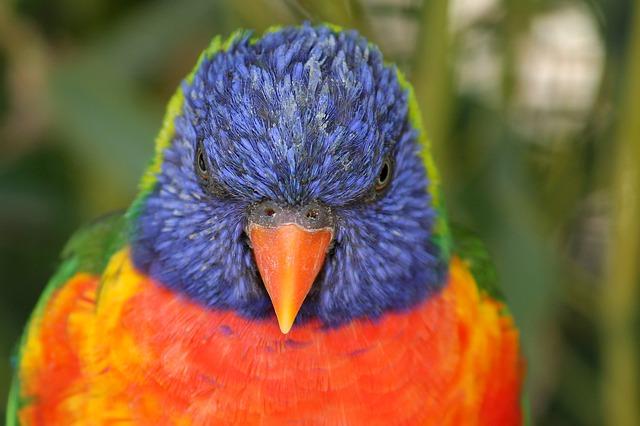 parrot-4606725_640