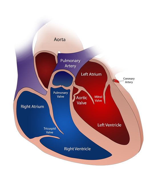 heart-2222964_640