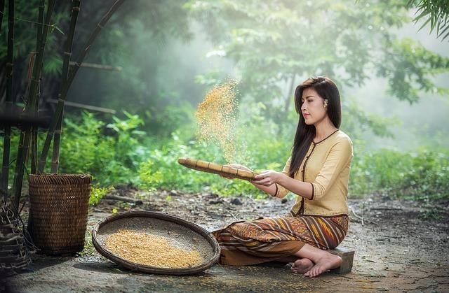 rice-1807554_640